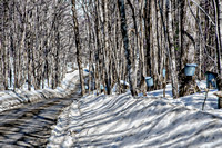 Lining The Road, Wrights Rd, Tinmouth, Vermont